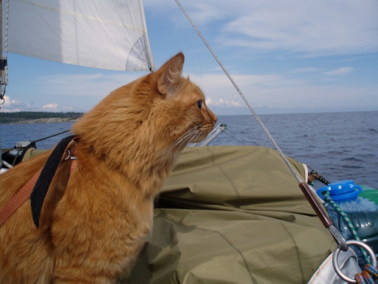 кошки нате подводных лодках